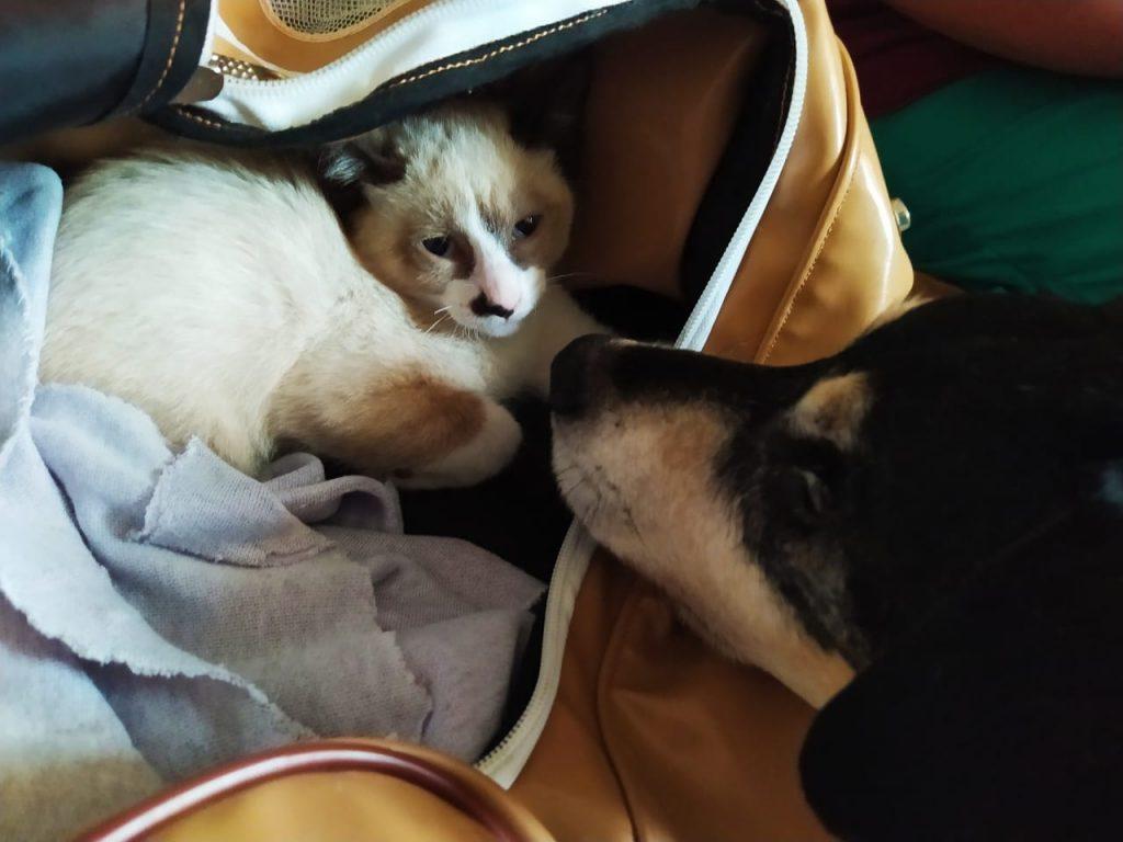 Toby se recupera e demonstra afeto com o gatinho
